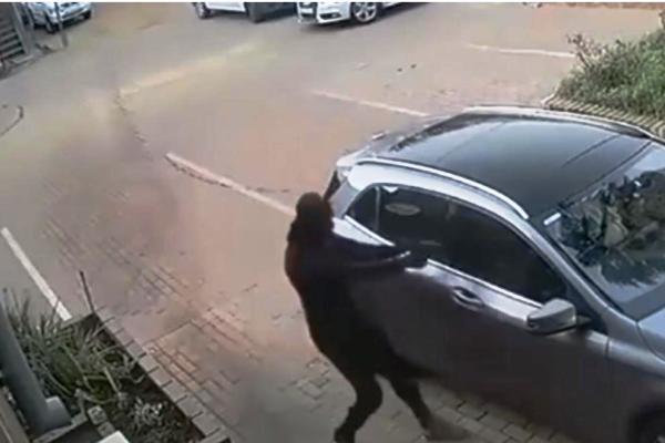 kradja1