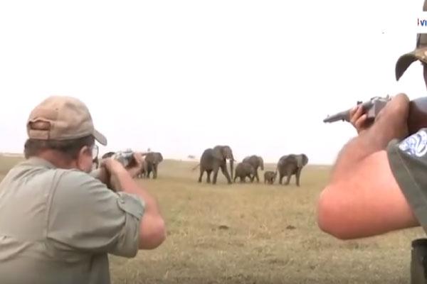 slonovi2